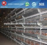 Cage galvanisée à chaud de couche de poulet de matériel de volaille de norme internationale