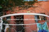 Sailin Fabrik galvanisierter Huhn-Draht