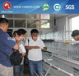 Hochfeste Geflügel-Huhn-Rahmen für Huhn-Bauernhof