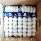 Aglio bianco normale della Cina nel sacchetto della maglia