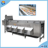 Auotmatic Orange Pomegranate Fruit and Vegetable Sorting Grading Machine