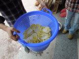 (FZHS-15) Máquina de desecación del hilandero centrífugo de la lechuga de la ensalada