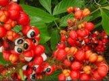 Het Deeg of de Gom van het Uittreksel van het Zaad van Guarana Guarana Seed P.E. Paullinia Cupana Guarana