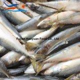 De nieuwe Oogst Bevroren Vreedzame Makreel van Vissen