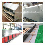 Breeder automatico Breeding Equipment per Poultry Farm House