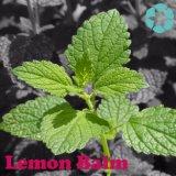 Extrait de baume de citron, acide de Rosmarinic
