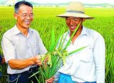 농업 Agrochemicals Nitenpyram Pymetrozine 작물 보호 살충제
