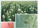 Биотехнологии биопрепарат Insectifuge Инсектицид Спинозад