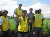 Проводник почвы Unigrow для риса засаживая, заболевания упорного, повышает рост