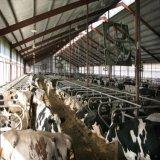 競争価格の専門デザイン低価格鋼鉄構造牛農場の家