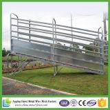 3m oder 3.6m Vieh-Eingabe-Rampe heißes BAD galvanisiert
