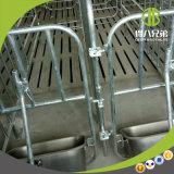 Matériel de porc de frères de Qingdao Deba améliorant le taux enceinte des truies