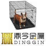 HOME do cão do fio do terrier australiano para a venda