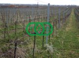 Fence Post, Rail, Grape Stake