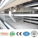 Система оборудования цыплятины клетки слоя самого лучшего гальванизирования цены автоматическая