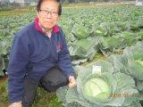 Blatt- Gemüsepflanzen mit Unigrow Schmutz-Signalformer