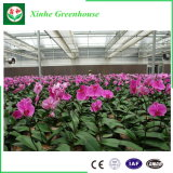 Estufa do vidro Tempered da Multi-Extensão para flor Growing