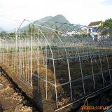 저가 꽃을%s 투명한 PVC 정원 온실