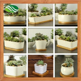 Bamboo Tray를 가진 각종 Ceramic Succulent Pot