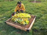 La plupart de cadre populaire de planteur de fleur de WPC