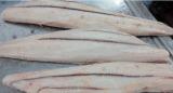 Raccordo nero Frozen dello squalo (squalo bronze del whaler)