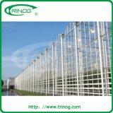 Estufa de vidro comercial para a exploração agrícola da grande escala