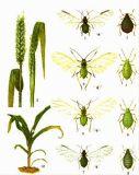 害虫のキラーの吸引、LambdaCyhalothrin+Acetamiprid Wdg
