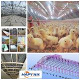 Het uitstekende kwaliteit het Geprefabriceerde Landbouwbedrijf van het Gevogelte en Huis van het Gevogelte