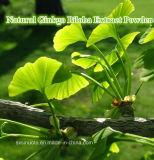 Natürliches Ginkgo Biloba Auszug-Puder/Ginkgo Biloba L.