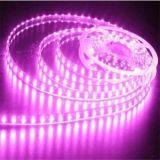 Color rosado 5050 luz de tira con 3 años de garantía