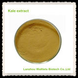 Extracto natural de la col rizada de la planta de la alta calidad