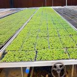 식물성 온실을%s 농업 씨 침대