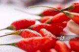 Frutos secos da baga de HACCP Goji