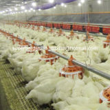 Breeder Houseのための高品質Automatic Poultry Equipment