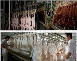 Set pieno di Good Quality Duck Slaughtering Machines