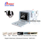 Ultrasonido Veterinario escáner 4D Doppler de ultrasonido Equina