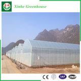 Einfach Plastikgewächshaus für Gemüse installieren