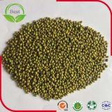 Feijão de Moong, feijões de Mung verdes