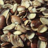Extrait de graine d'irvingia gabonensis