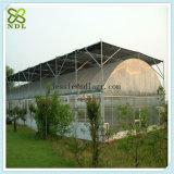 Casa verde pré-fabricada de película plástica para alface Growing