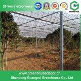 Película da extensão da agricultura casa verde da multi para vegetais