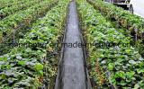 Cerca tejida plástico del légamo del control de Weed