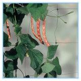 Pflanzenstützineinander greifen (Schwarzes, Grün)