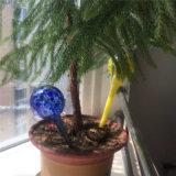 Globos de /Globes/Device/Water de vidro molhando dos bulbos da planta