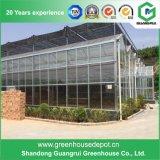 Multi-Überspannung Venlo Typ Glasgewächshaus für viele Verbräuche