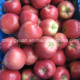 Buena calidad para la exportación de Fresh Red Star Apple