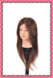 Testa calda 22inches del Mannequin dei capelli umani di 100% per il banco di bellezza