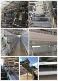 H en een Apparatuur van de Kooi van de Kip van het Type voor het Landbouwbedrijf van het Gevogelte