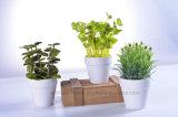 Fija de la menta de Rosemary /Herbs/ de 3 de la simulación plantas de los bonsais para la decoración