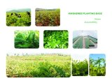 100% Isoflavonas Naturales 8% -80% Extracto de Trébol Rojo